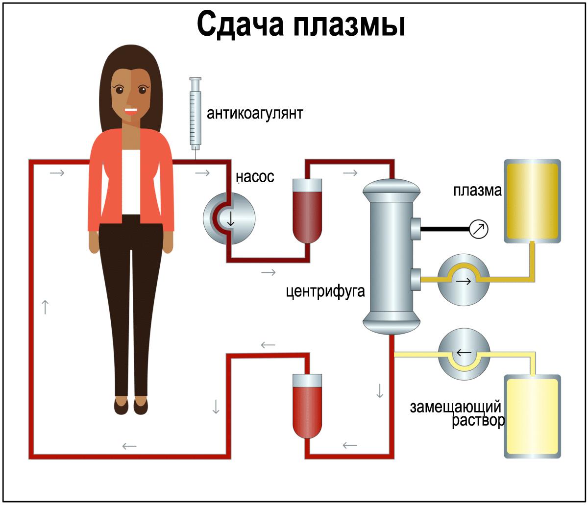 Схема сдачи плазмы крови